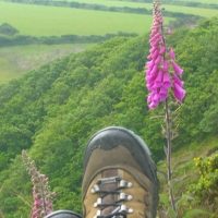 Feet and Foxgloves